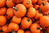 Recently harvested orange pumpkins in a random pile