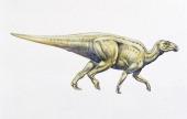 Reconstruction of hadrosaurid or duckbilled dinosaur Ornithopods Upper Cretaceous Color illustration