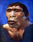 Reconstruction of Java Man based on skull cap thigh bone and 2 back teeth discovered in Pliocene fossil beds in Trinil Central Java by Dr Eugene...