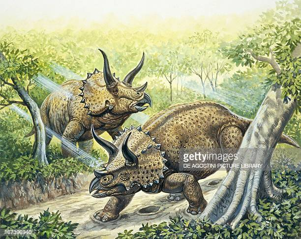 Reconstruction of Triceratops Late Cretaceous Period Color illustration