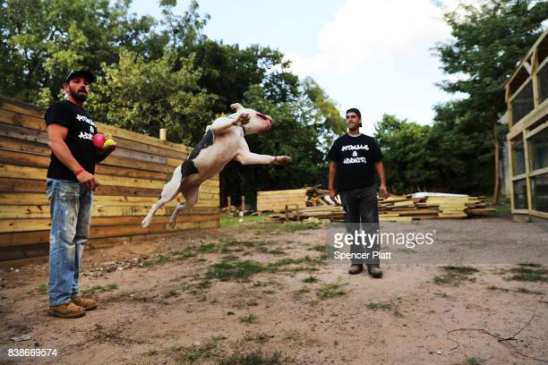 Recovering addict Michael Favor plays with one of his rescued pitbulls at Pitbulls and Addicts a Staten Island dog rescue which aims to help both...