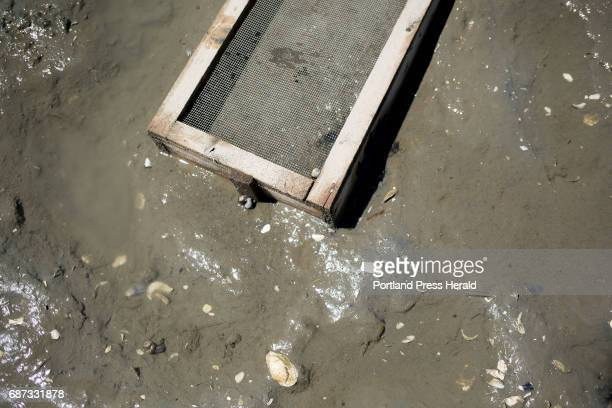 A recruitment box invented by Dr Brian Beal on the mudflats of the Harraseeket River The boxes catch settling clams and then protect them as they grow