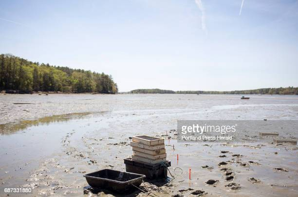 Recruitment boxes invented by Dr Brian Beal on the mudflats of the Harraseeket River The boxes catch settling clams and then protect them as they grow