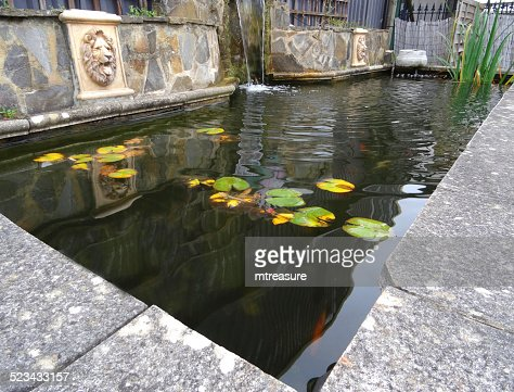 Rectangular raised formal pond image water lilies waterfall water feature stock photo getty images Rectangular koi pond