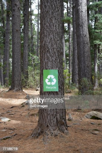 A recycle sign on a tree in the woods : Stock Photo