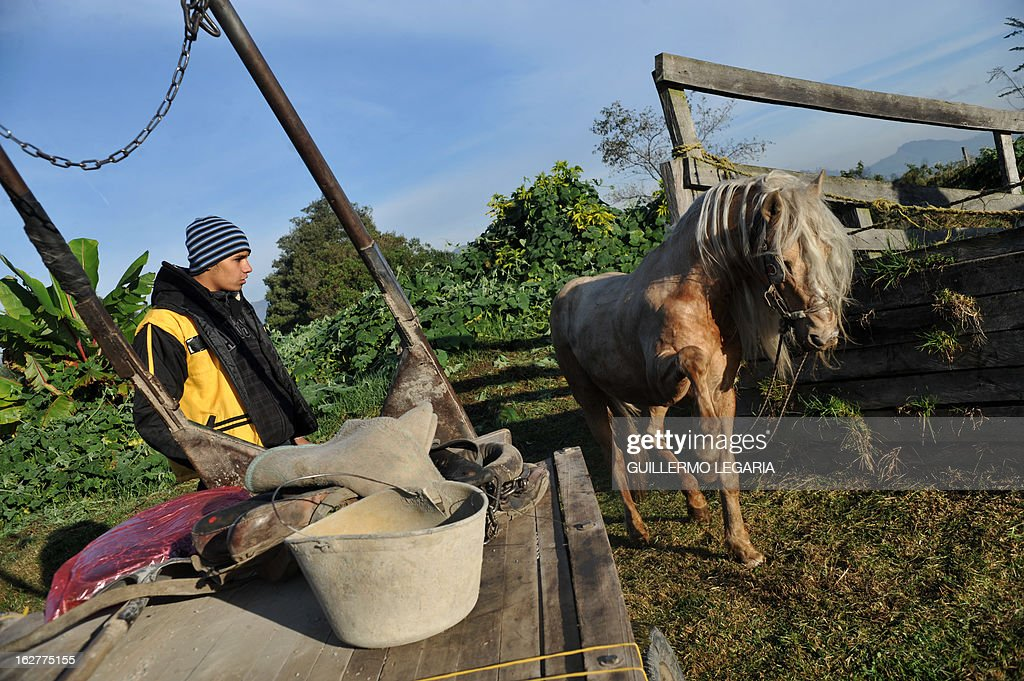 A recycler frees his horse from the cart on February 26, 2013, in Bogota, Colombia, after taking part in a caravan of 50 recyclers, pickers and loaders, on horse-drawn carts, who will deliver their horses to the University of Applied Sciences and Environment (UDCA), where they will receive veterinarian care and will wait to be adopted, as part of a process to replace their carts by motor vehicles. The replacement was an initiative of the Mayor of Bogota, the Mobility Secretariat, and Animal Rights associations. AFP PHOTO/Guillermo Legaria
