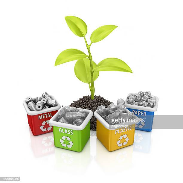 recycling bins and plant