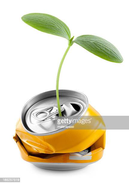 Recycling. Seedling into a can.