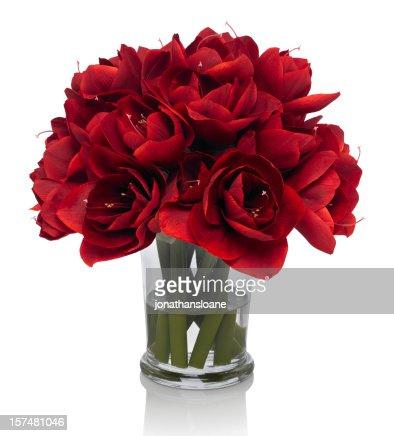 Red Amaryllis bouquet on white background