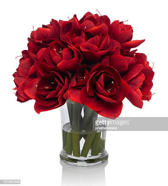 Red Amaryllis bouquet on white background