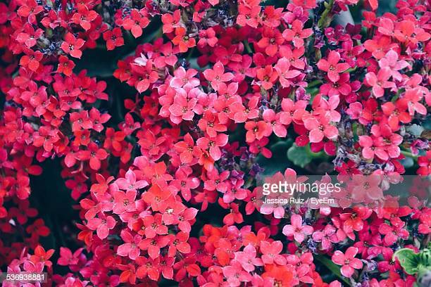flowers stock photos and pictures  getty images, Beautiful flower
