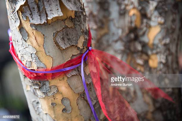 A red and purple ribbon is tied to a tree after a rally bringing attention to the one year anniversary of the kidnapping of hundreds of Nigerian...