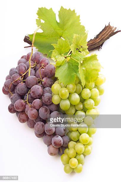 Bunch of purple and green grapes