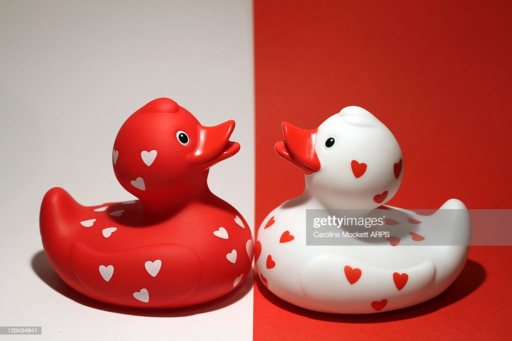 Red and white rubber ducks covered wirth hearts : Stock Photo