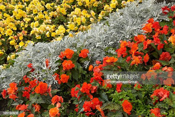 Red and Yellow Flowers with silver fern in a diagonal pattern in a planted garden on Saint Stephen Green in Dublin Ireland