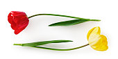 Red and yellow tulip flower with leaves. Two objects isolated on white background clipping path included. Spring garden flowers