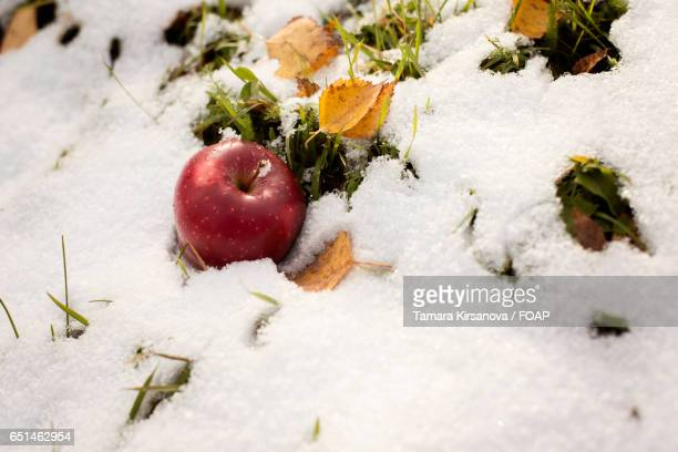 Red apple on the snow