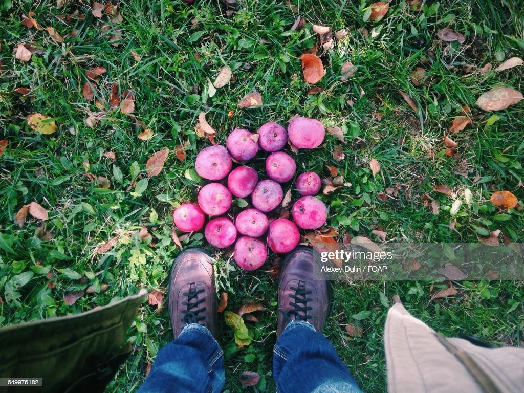 Red apples on grass : Stock Photo