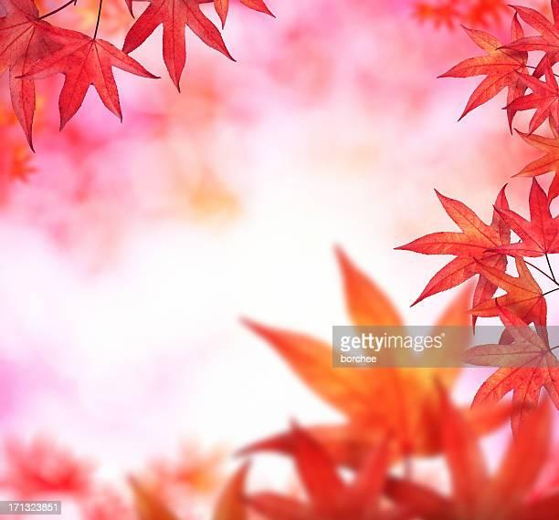 レッドの紅葉