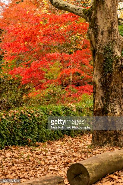 Red autumn tree leaves