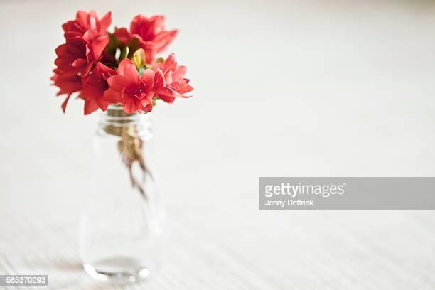 Red azaleas in vase on table