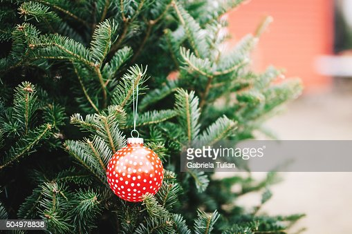 Red ball decorating a Christmas tree outdoors  Stock Photo