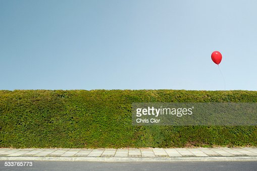 Red balloon floating over neatly trimmed hedges