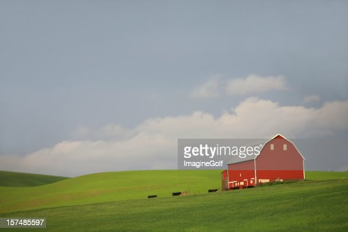 Red Barn and Cows