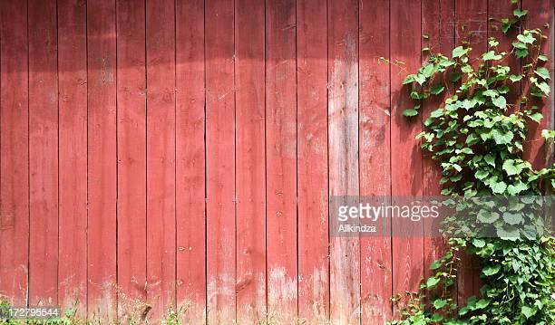 red barn green vine background