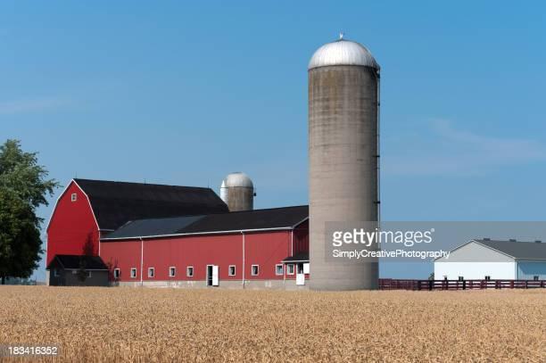 赤色小麦のフィールドにバーンズ