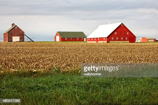 Red Barns on a Farm : Stock Photo