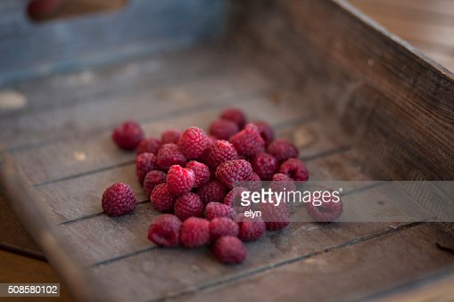 red berries : Stock Photo