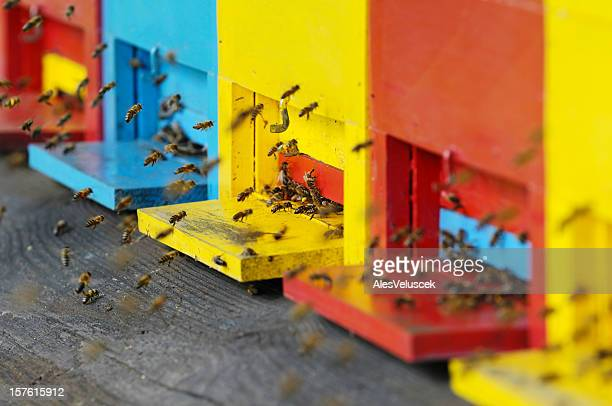 Red, blue and yellow beehives with swarming bees