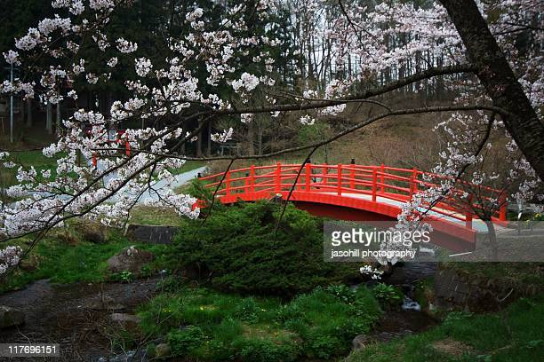 japanese garden cherry blossom bridge - Japanese Garden Cherry Blossom Bridge