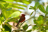 This brightly colored bird is set against the lush tropical greenery