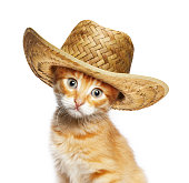 Red cat in wicker straw hat, isolated on white background
