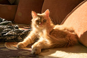 red cat on the couch among orange pillows