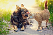 Red Cat rubs head against dog in the yard