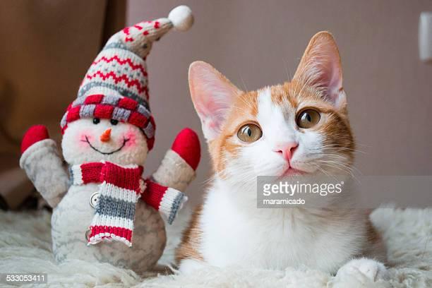 Red cat siting near snowman