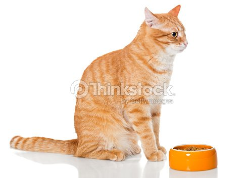 Red cat sitting near the bowl of dry food : Stock Photo