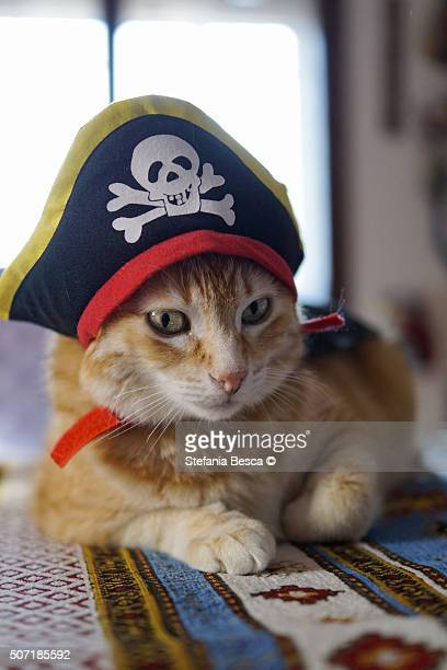 Red cat with pirate hat