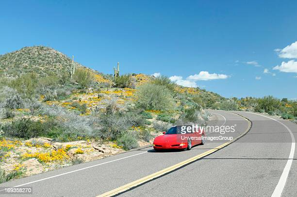 Red Chevrolet Corvette cruises down North Lake Road at Bartlett Lake Recreation Area during the spring poppy bloom in the Tonto National Forest...