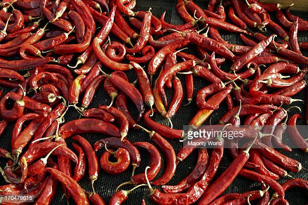 red chilli peppers chillis spicy food a chilli farm in the Western Cape South Africa