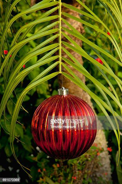 Red Christmas ball hangs from palm frond
