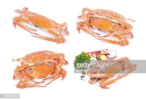 Red crab : Stock Photo