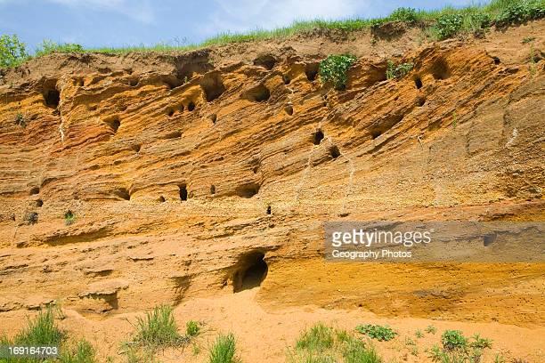 Red crag rock exposed at Buckanay Pit quarry Alderton Suffolk England