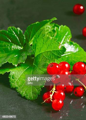 Rojo currants con hojas sobre fondo oscuro : Foto de stock