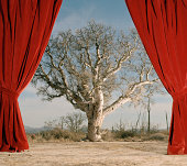 Red curtain in front of tree