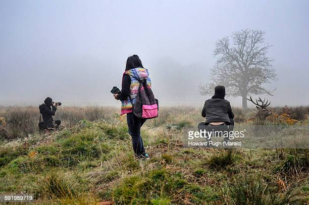 Red deer tourists in the mist
