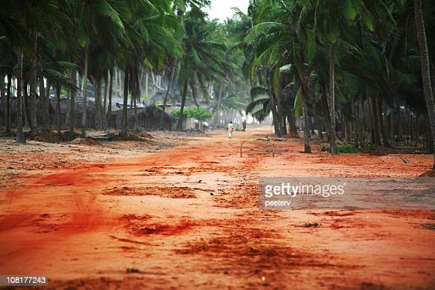 Red Dirt Road in Tropical